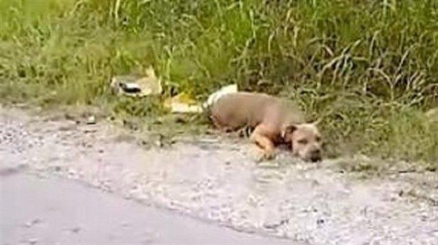 История спасения Мерси, которую бросили избитой на обочине дороги