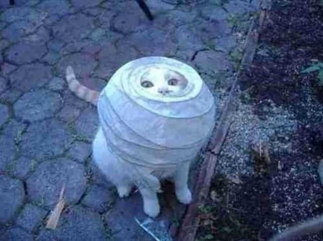 13 фото доказательств того, что коты на самом деле пришельцы из космоса