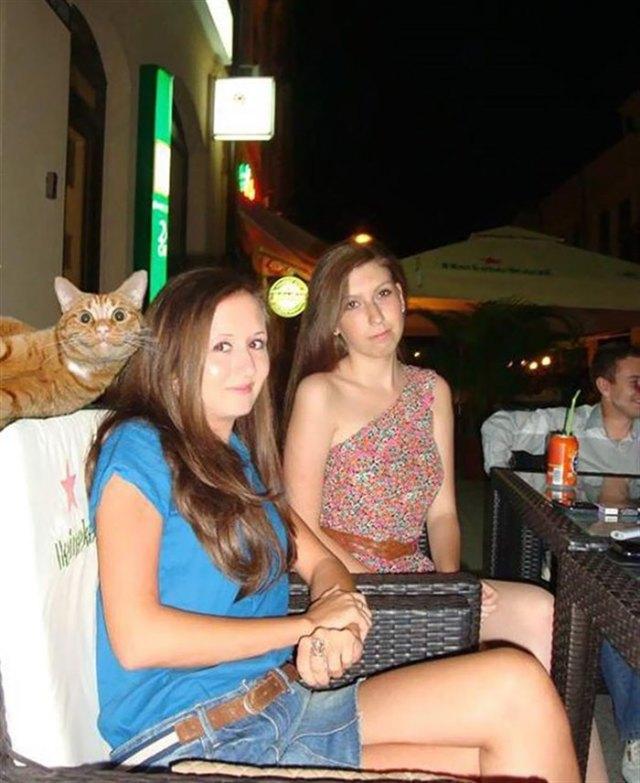 18 фотографий, которые были бы скучными, если б в кадре внезапно не появились кошки