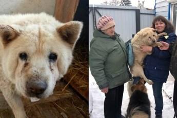 В приют попала слепая собака… Волонтёры и представить не могли, насколько важно было вернуть её домой!