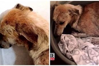 Когда собаку привезли из приюта, она сильно грустила и отказывалась от еды. Хозяевам пришлось снова вернуться в приют за помощью