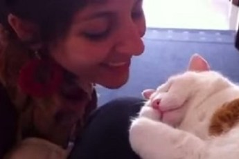 Хозяйка целует своего кота. Реакция животного просто бесподобна