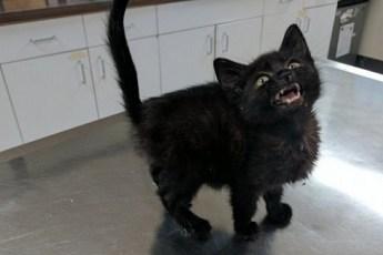 Люди спасли котенка, который на улице погибал от истощения.