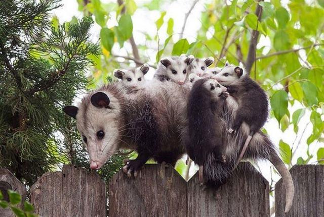 Очаровательные фото мам-животных, трепетно оберегающих своих деток