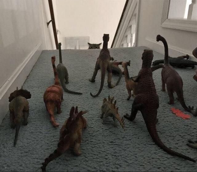 14 примеров странного поведения животных