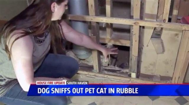 Собака была спасена во время пожара, а через 2 месяца она привела их к чёрной дыре в сгоревшем доме
