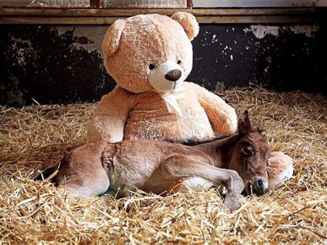 18 милых снимков животных и с любимыми игрушками