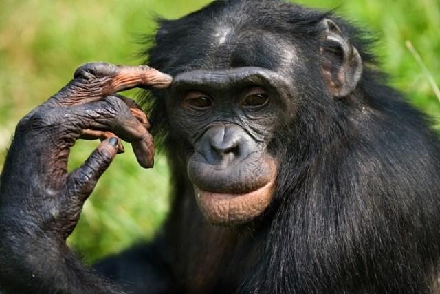 10 самых умных животных, которые способны на многое! IQ вашего питомца куда выше, чем вы думали
