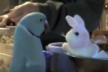 Попугай получает игрушечного кролика на день рождения. Его реакция бесподобна!