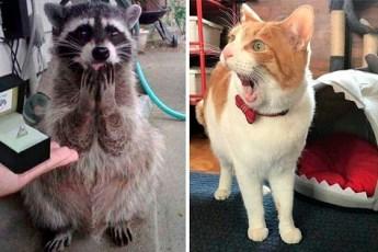 20 фотографий животные, которые заставят улыбаться