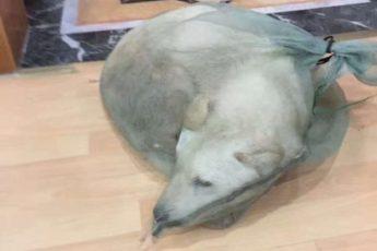 Мужчина спас собаку, которую продавали на мясо. Потребовался всего месяц, чтобы превратить его в счастливое животное