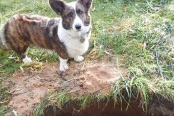 Неизвестный закопал маленьких живых щенков в землю. Они бы погибли, но рядом гуляла внимательная собака