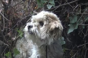 Выброшенная из-за неправильного прикуса собака голодала возле аэропорта. Спасатели сделали 7 попыток, чтобы спасти животное