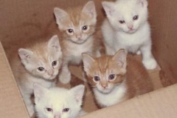 38 котят брошены на свалке! Помочь бы, но кто возьмётся? Решение пришло неожиданно…