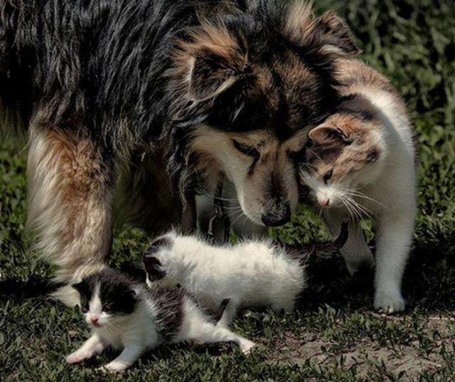 13 милых фотографий собак и кошек разжигающих тепло в душе