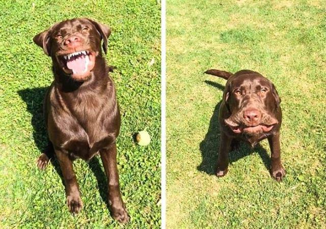 20 самых смешных животных для борьбы со стрессом. Они помогут скрасить даже самый плохой день