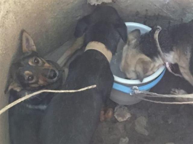 В Севастополе 3 собаки были брошены в колодец неизвестными