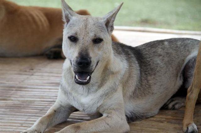 Этот пес провел в приюте шесть лет и очень сдружился с одной собачкой. А когда пришли его забрать, он ни как не мог ее оставить…