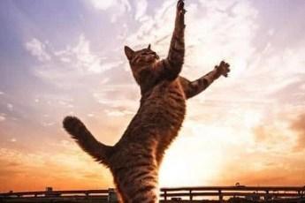 Великолепная подборка удивительных котиков