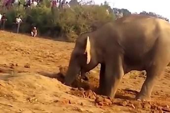 Вы будете удивлены, когда узнаете зачем слониха рыла яму целых 11 часов