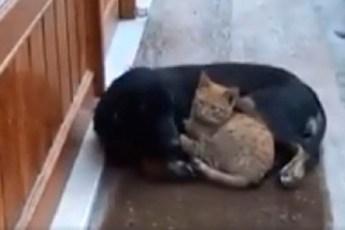 Очаровательная история о встрече кота и собаки у дверей кафе в холодный день