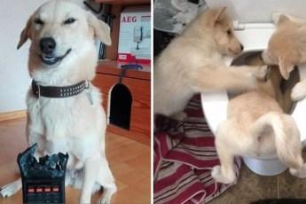 15 забавных снимков с собаками
