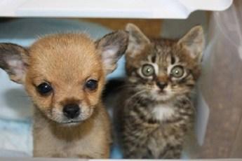 Маленький котенок и щенок из приюта спасли друг друга от опасности