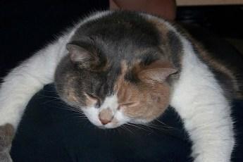 4 причины, почему кошка спит на вас