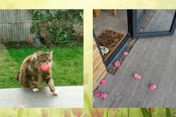 Эта кошка «обслуживает» 6 домов, принося людям розы… И это не единственная странность!