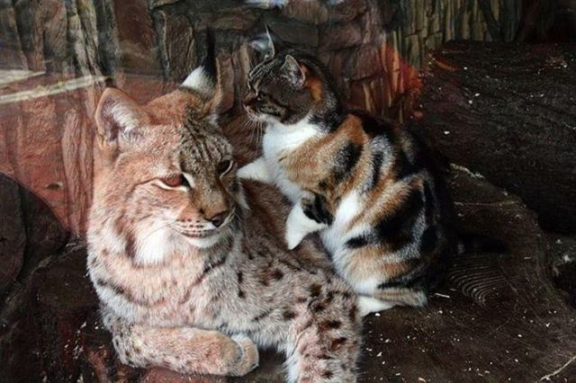 Бродячий котик нашел себе друга в зоопарке