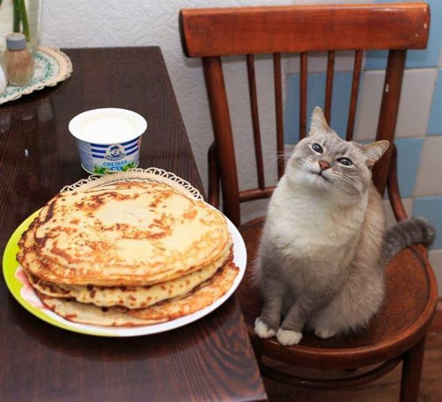 15 котов, которые практически смогли добраться до еды