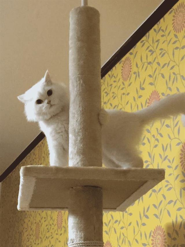 Работники приюта отговаривали девушку брать этого больного кота, но посмотрите, каким красавцем он стал!