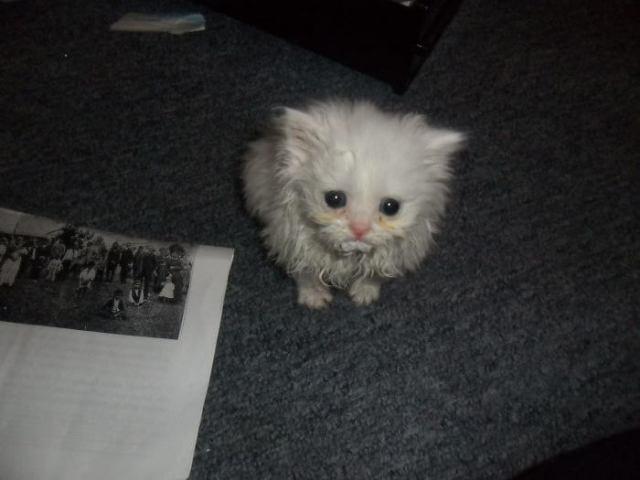 15 котов, которые появились когда их не ждали