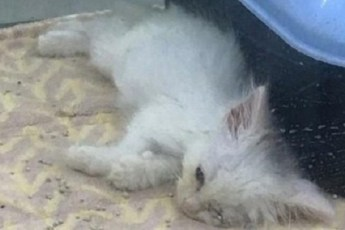 Мужчина спас котенка, который умирал на витрине зоомагазина