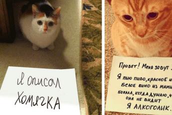 10 виноватых котов, которые очень сожалеют о своем проступке
