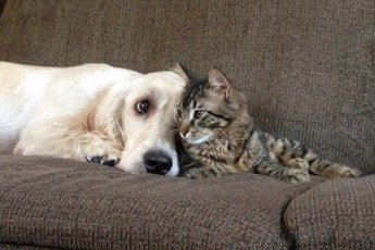 Милые фотографии собак и кошек, на которых продемонстрирована истинная дружба