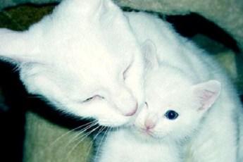 Кошка стала настоящим ангелом хранителем. Она рвалась в хозяйский дом и таким образом спасла целую семью