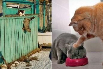Смешные кошачьи разборки