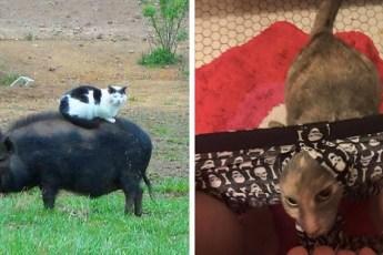 15 снимков подтверждающих, что страшнее кота зверя нет!