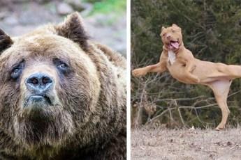 Животные, которые не рады, что их фото попали в интернет и хотели бы от них избавиться