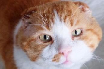 Кот сидел на пороге и просил о помощи, он надеялся, что его накормят, но его накормили и поставили на ноги
