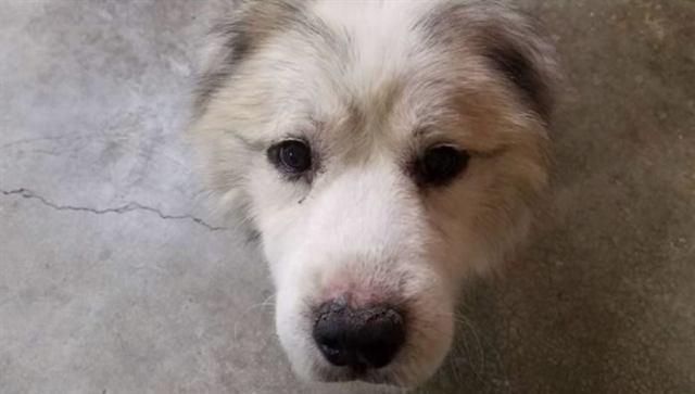 Он запер собаку на 7 лет в сарай… Когда волонтеры пришли его спасать, они онемели…