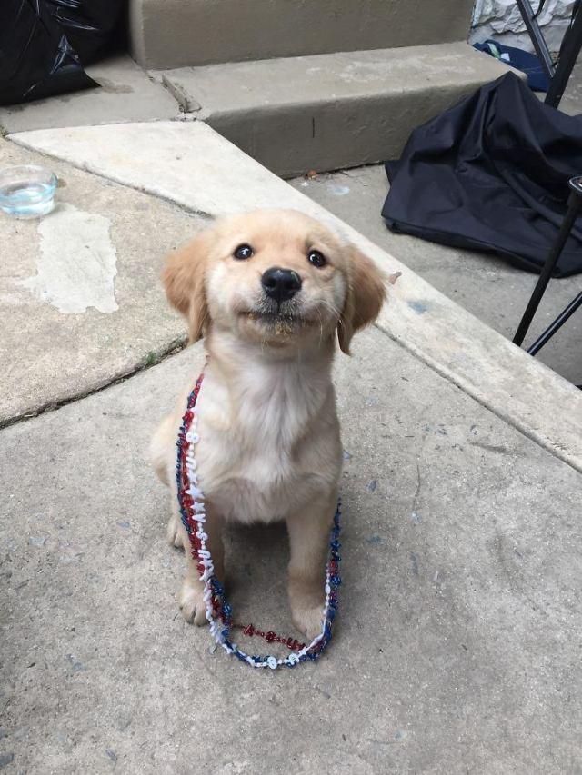 Фото доказывающие, что Ретриверы лучшие псы на свете