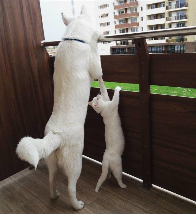 Семья подыскивала друга-котёнка для своего щенка – как удачно, что они повстречали уличную кису, которая искала дом!
