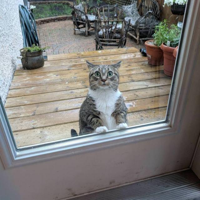 Песики и котики, которые являются отличной таблеткой от депрессии