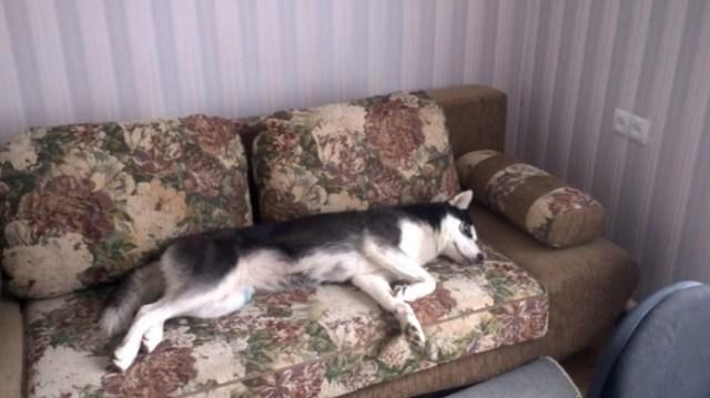 Ленивая Даша не хочет просыпаться и идти гулять. Невероятно смешное видео
