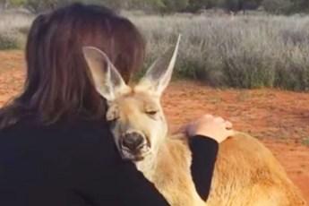 10 лет назад девушка спасла кенгуренка, которому было всего 5 месяцев. С тех пор он каждые день ее благодарит