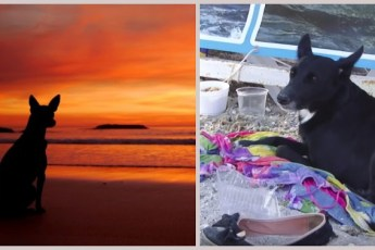 Хатико из Жемчужины-у-Моря: одесский пёс сутки стерёг вещи уплывшей хозяйки, которая… забыла этот день!