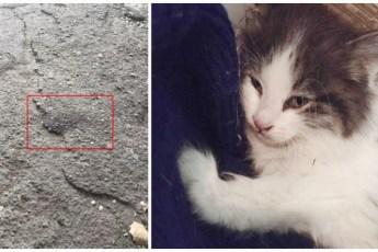 Парень нашёл котенка и отправился в клинику усыпить его, но произошло невероятное!
