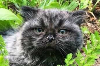 Двое одиноких котят пришли из лесу… Люди долго не могли понять, что не так с одним из малышей!